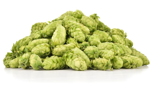 Humulene is found in Hops